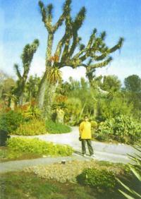 Ботанический сад Лос-Анджелеса, США