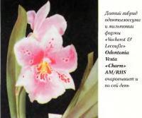 Давний гибрид одонтоглоссума и мильтонии
