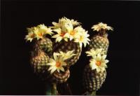 Группа привитых растений