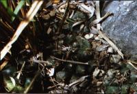 Группа растений возле Серритос