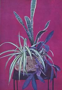 Композиция комнатных растений