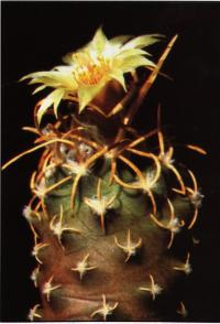 Культурное растение