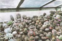 Любительская коллекция кактусов