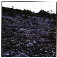 Местность, где растет Т. pseudomacrochele возле Иксмикильпан (Ixmiquilpan)