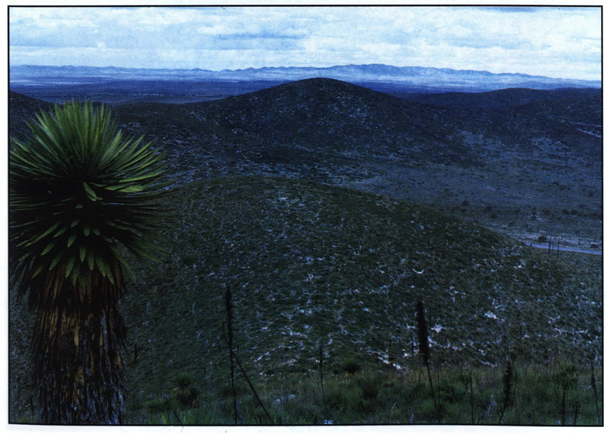 Место возле Матеуалы (Matehuala), где растет T. valdezianus var. albiflorus