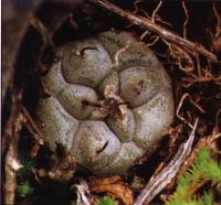 Молодое растение в природе