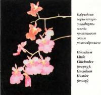 Орхидея Oncidium Little Chickadee (вверху); Oncidium Hustler (внизу)