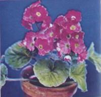 Первоцвет обратноконический с красными цветками
