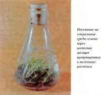 Посеянные на стерильные среды семена