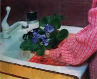 Промывают листья чистой теплой водой