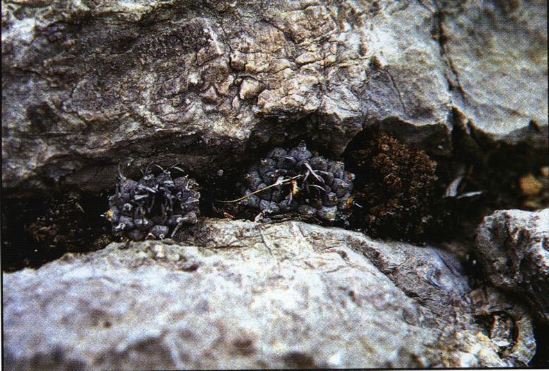Растения в трещинах скал