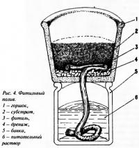 Рис. 4. Фитильный полив