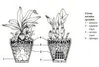 Схема посадки орхидей