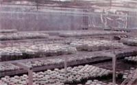 Специально приспособленные оранжереи (Rollke Orhideenzucht)