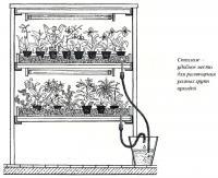 Стеллаж — удобное место для размещения разных групп орхидей