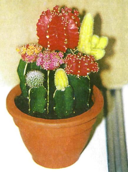 Стенд Южной Кореи на Международной выставке цветов в Москве, сентябрь 2000 г.