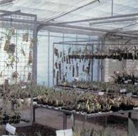 В оранжереях растения размещают на стеллажах и вертикальных стенках